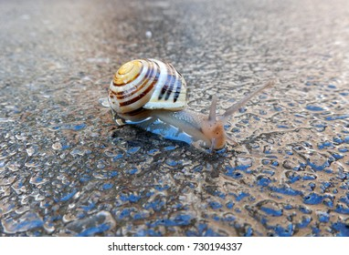 Colorful cute snail crawling across cement on a sunny rainy day.