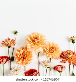 Colorful dahlia and cynicism flowers on white background. Flat lay, top view.