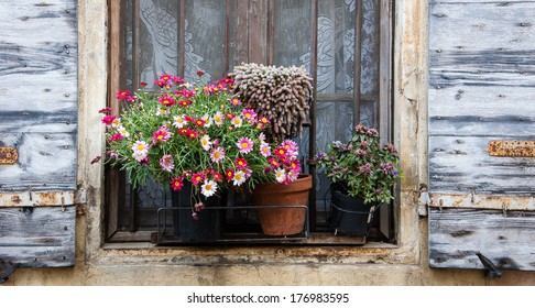 Colorful daisy flowers and cactus in pots placed on the window of the old stone house. Closed window with lace curtain, rusty lattice and open wooden shutters. (Arles, Provence, France)