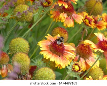colorful daisy flowers in summer