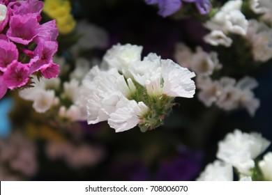Colorful deadwood flowers