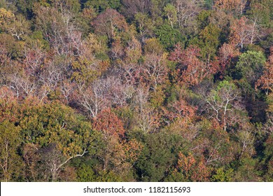 Colorful deciduous forests are for the background.