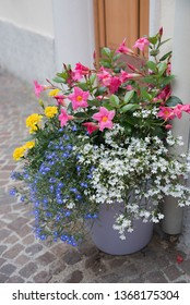 colorful decorative flowerpot with yellow tagetes, white and blue lobelia, pink mandevilla in a mediterranean narrow alley