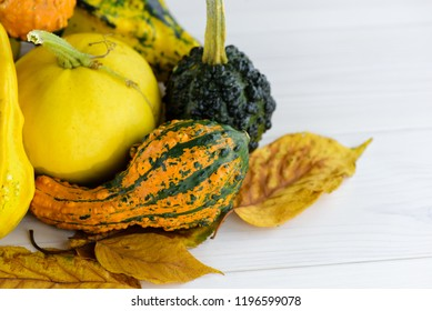 Colorful decorative pumpkins and gourds in autumn on wooden table.