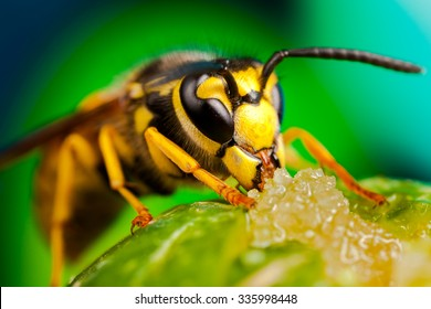 Colorful detailed macro of a wasp.