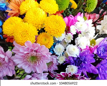 Colorful different chrysanthemum flowers pattern in floral shop. Chrysanthemum annuals pink yellow green white violet chrysanthemum background. Detail many purple violet vivid flowers closeup design