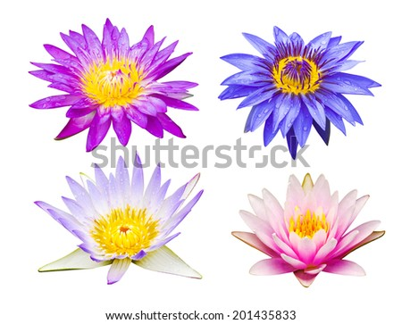 Colorful different type lotus flowers stock photo edit now colorful of different type lotus flowers mightylinksfo