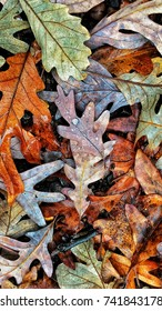 Colorful display of Autumn leaves
