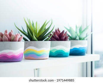 Colorful DIY round concrete pot with beautiful green, pink and red succulent plants decoration on a white wooden shelf on white wall background near glass window. Four unique painted cement planters.