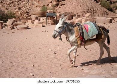 Colorful Donkey.   Taken at Petra, Jordan.