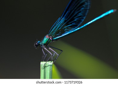 A colorful dragonfly