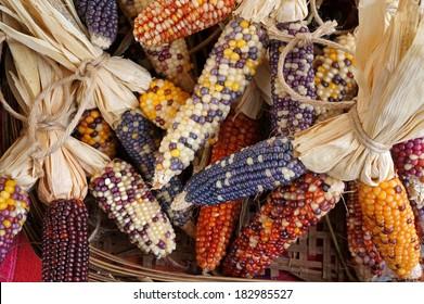 Colorful dried Corn