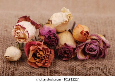 colorful dried roses over vintage background/dry roses