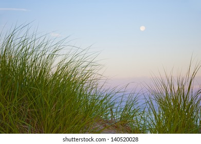 Colorful dune grass and moonrise on beach