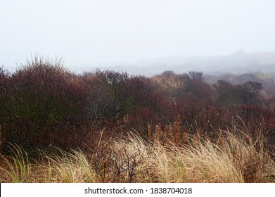 Colorful dunes in a foggy, freezing drizzle winter day