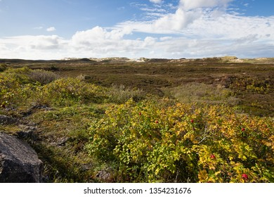 colorful dunes in List at Sylt Island in autumn