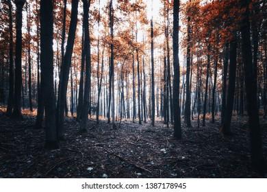 Colorful dyed beech forest results in a mystical mood