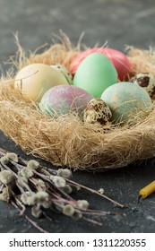Colorful easter eggs  in straw nest on gray background. Happy Easter