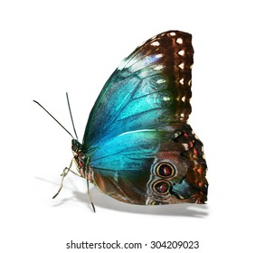 Colorful exotic butterfly on white background