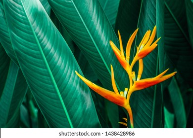 colorful exotic flower on dark tropical foliage nature background, tropical leaf