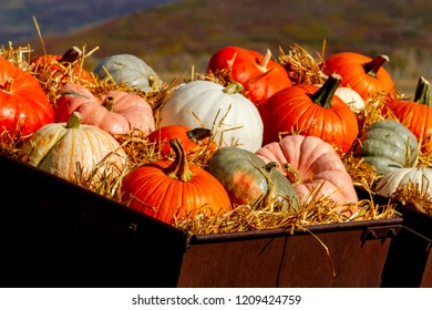 Colorful fall display of a variety of pumpkins sitting in straw in old farm equipment along rural mountain ranch road