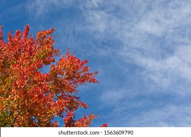 Colorful fall foliage against a bright blue sky with wispy clouds