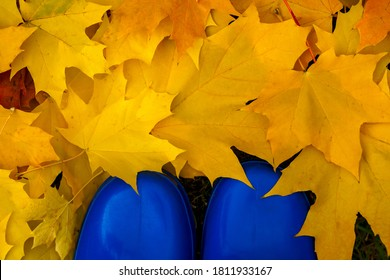 Colorful fall foliage and blue boots. Maple leaves.