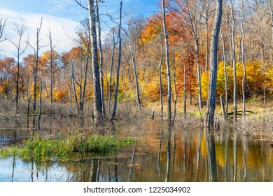 Colorful fall foliage surrounds a swampy area in Indiana.