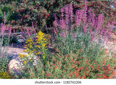 Colorful Fall garden flowers in local park. Shot locally at Kendrick Lake Park, Lakewood, CO September 2018.