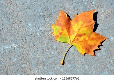 Colorful Fall leaf.