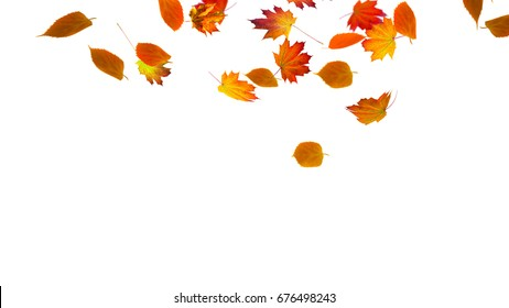 colorful fall leaf on white background