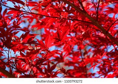 Colorful fall leafs