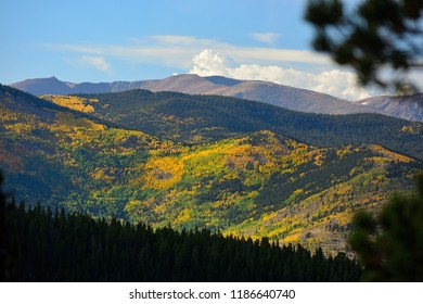Colorful Fall Leaves from Aspen Trees in the Rocky Mountains