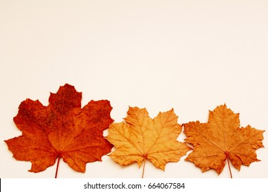 COLORFUL FALL LEAVES AT BOTTOM BORDER