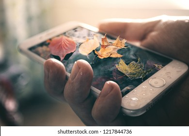 Colorful fall leaves on top of a smart phone