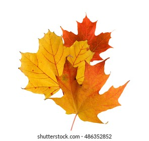 Colorful fall leaves on a white background