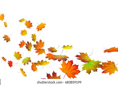 colorful fall leaves on white background