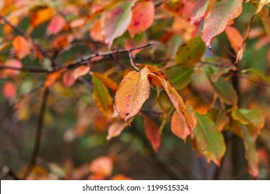 colorful fall leaves with tiny droplets on the leaves