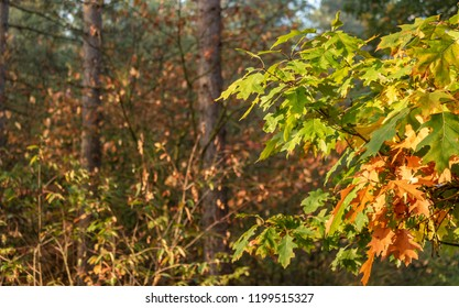 colorful fall leaves with typespace on the left side