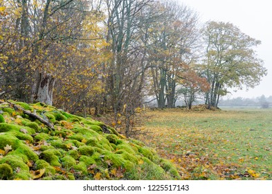Colorful fall season view with green moss and orange leaves