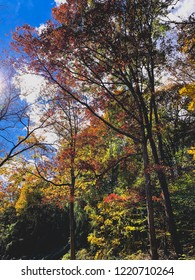colorful fall trees on a sunny day