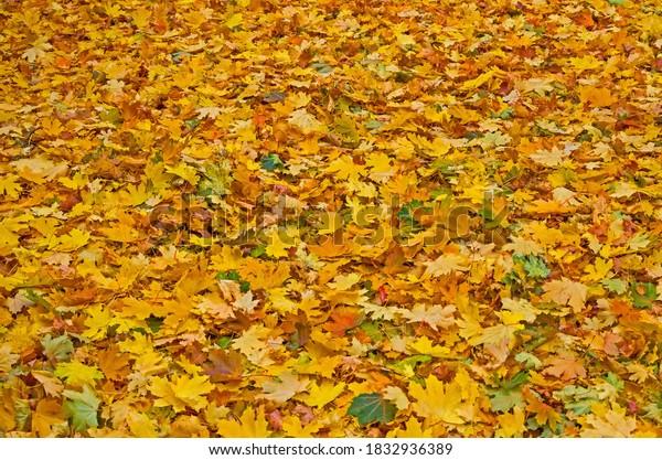 colorful-fallen-foliage-city-park-600w-1