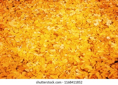 Colorful fallen leaves floating on the surface of the pond, beautiful autumn outdoor background
