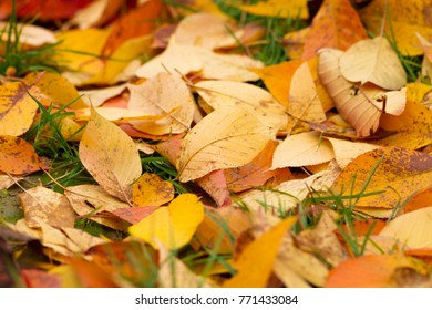 colorful fallen leaves on grass