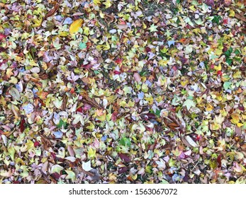 Colorful of the fallen leaves on the ground for natural and autumn background concept