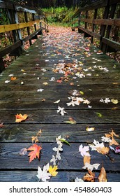 Colorful Fallen Maple Leaves on a Wooden Foot Bridge in Autumn