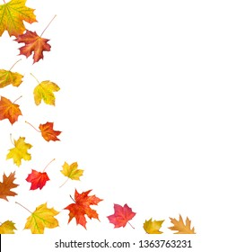 colorful falling leaves in front of a white background