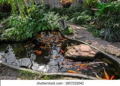Colorful fancy koi fish on the surface water / beautiful fish carp swimming in the pond garden enjoy food floating