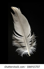 colorful feather on a black background