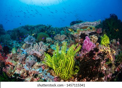 Colorful feather stars and soft corals on a reef inside the Coral Triangle in South East Asia